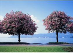 影楼背景图片-樱花树下