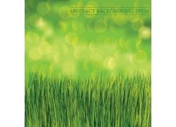 春天绿草素材