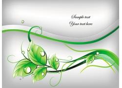 绿叶上的水珠素材