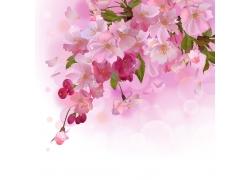 盛开的粉色桃花插画