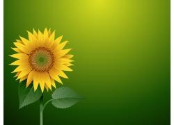 一支向日葵