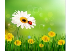 夏季花草瓢虫