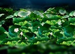 影楼背景图片-河塘月色