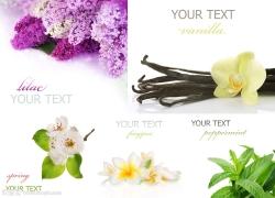 花朵卡片高清图片(5)