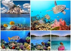 海底世界图片素材(5p)
