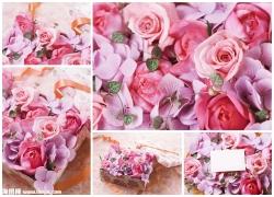 玫瑰花图片素材(5p)