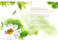 树叶 花朵背景psd素材