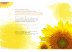 向日葵与黄色背景psd素材