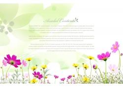 漂亮的小花背景psd素材