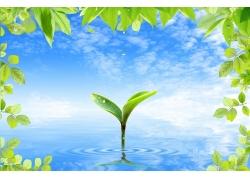 水中嫩芽 树叶SPD素材