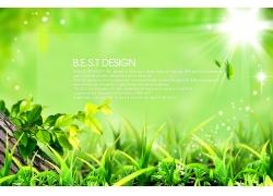 清新绿色背景PSD素材
