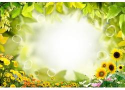 绿叶 花草 向日葵PSD素材