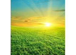绿草地阳光风景图片