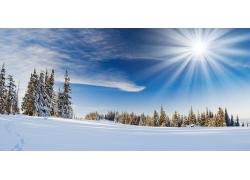 雪山 雪松 雪地图片