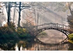 森林中的小桥流水风景图片