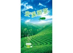 铁观音茶庄海报设计PSD素材