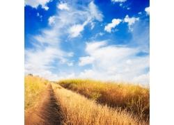 蓝天白云草丛风景图片