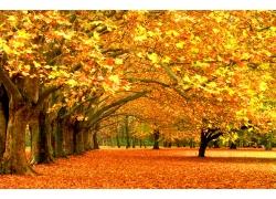 秋天枫叶风景图片