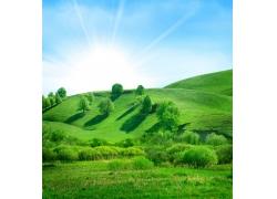 小山坡风景图片
