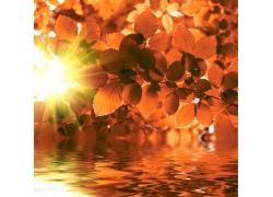 阳光水波树叶