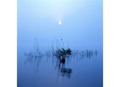 河面上的芦苇自然风景图片