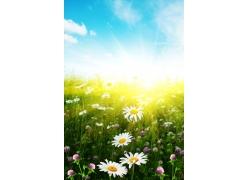 阳光下的野花图片