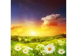 蓝天下的野花图片