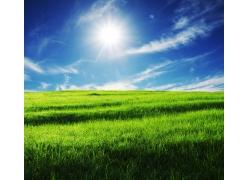 绿色草丛图片