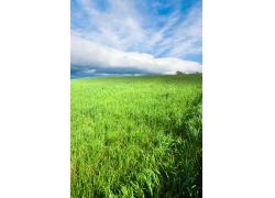 绿草青青自然风景图片