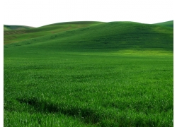 绿地自然风景图片