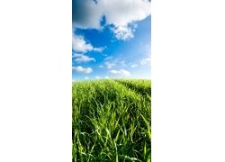 春天的草地自然风景图片