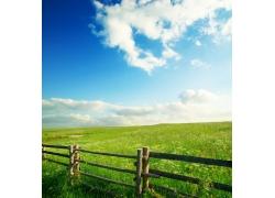 春天的农牧场图片
