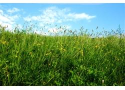 绿色草场图片