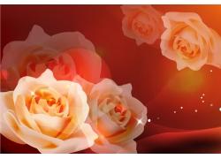 白色玫瑰花移门图片