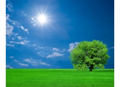 阳光下的大树图片