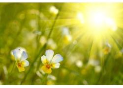 金色阳光中的小花图片
