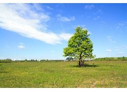 草地中的大树图片