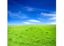 蓝天下一望无际的草地风景图片