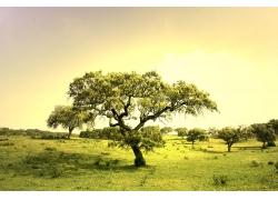 草地上的大树风景图片