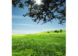 绿色的原野风景图片