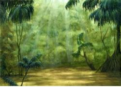 阳光下的热带植物图片