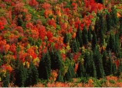 色彩绚丽的森林风景图片