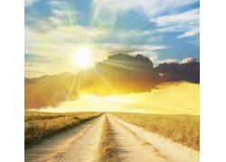 麦田中的路风景图片