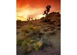 干旱沙漠上的仙人掌高清风景图片