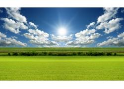 阳光下的绿色原野自然风景图片