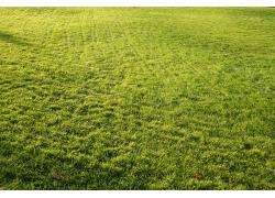 平坦的绿色草坪风景图片