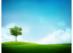 绿色原野上的绿色的树风景图片