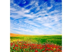 蓝天草地红花风景图片