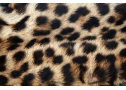 豹纹背景图片