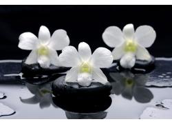 SPA石头与樱花高清图片